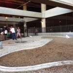 Dog Friendly Airport - Phoenix Sky Harbor Dogsized