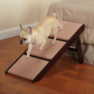 How To Train Your Dog To Use A Dog Ramp?