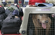 Flying with a Dog, Not In Cabin Dogsized