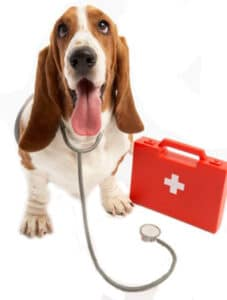 firstaiddog
