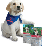 Itchy Dog? Here are our anti-itch / anti-insect solutions! Dogsized