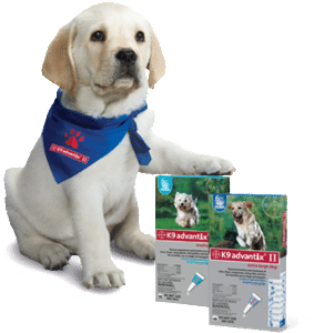 Prevent Lyme Disease in Dogs Dogsized