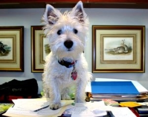Pet Tax Deductions - thanks to the cat lady Dogsized