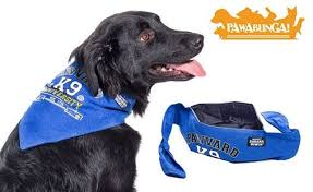 Bandana Bowls for Dogs - So Clever!  Dogsized