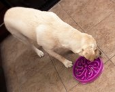 Does Your Dog Eat Too Fast? Try a Slo-Bowl Dogsized