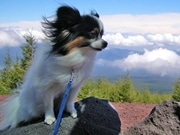 Tips for a Dog Hike - Fun Outdoor Adventure Dogsized