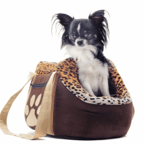 Dogs Bags & Carriers