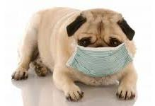 Kennel Cough - What Is It & What To Do About It? Dogsized