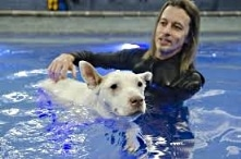 Water Rehabilitation for Dogs Dogsized