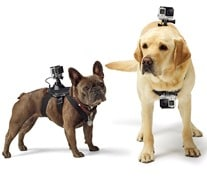 GoPro Fetch - Seeing from a Dog's Point of View Dogsized