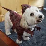 Contest - Win an Animal Planet Raptor Dog Costume Dogsized