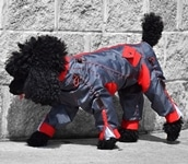 Zippy Dog Suits