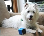 Pet Tunes - Help Your Dog Relax Dogsized