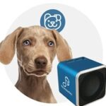 Top 20 Dog Gifts - 2014 Holiday Gift Guide Dogsized