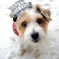 Dog New Year's Resolutions for 2017 Dogsized