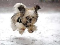 Safe Paw Ice Melter - a Pawfect Solution Dogsized