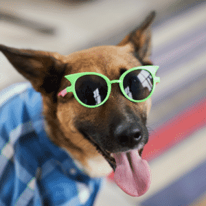 Dog Safety for Summer Parties