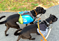 Fit Dogs Can Carry Their Own Poop Bags! Dogsized