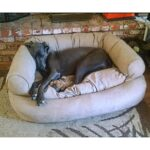 snoozer large dog bed