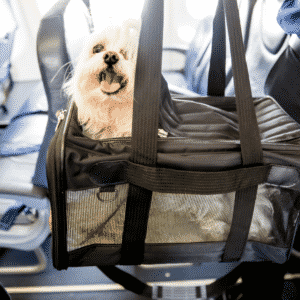 Top 5 FAA Approved Dog Carriers