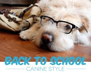 Back to School for Your Dog Dogsized
