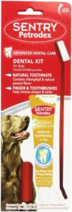 how to clean your dog's teeth
