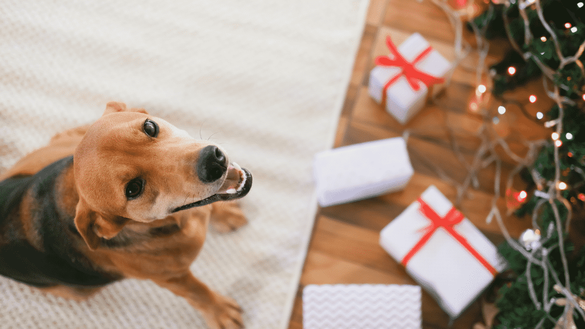 Top 20 Dog Gifts - Holiday Gift Guide