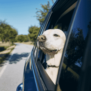 Dog Car Travel - How to have a good road trip with your dog