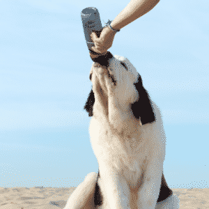 Top Dog Water Bottles to Keep Your Dog Hydrated