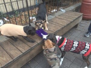 Real Tough Dog Toys - West Paw Rowdies! Dogsized