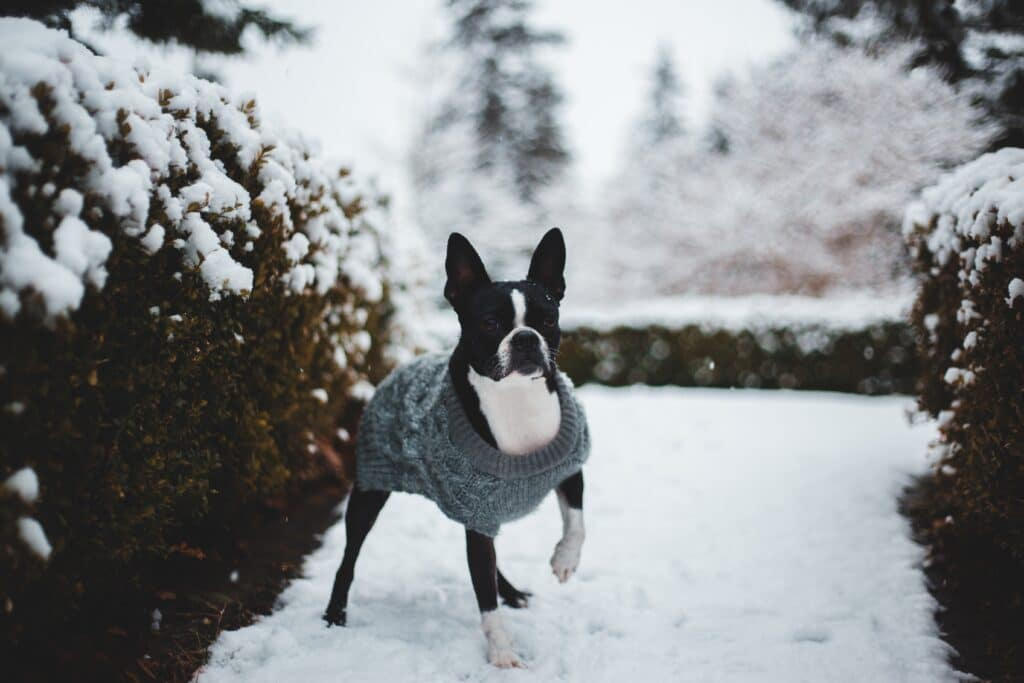 When Should My Dog Wear Winter Dog Coats?