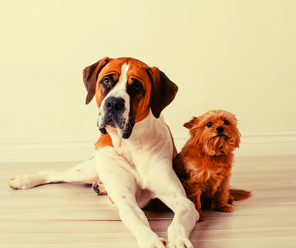 The Ultimate Dog Size Guide
