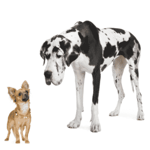 What are the Different Sizes of Dogs?