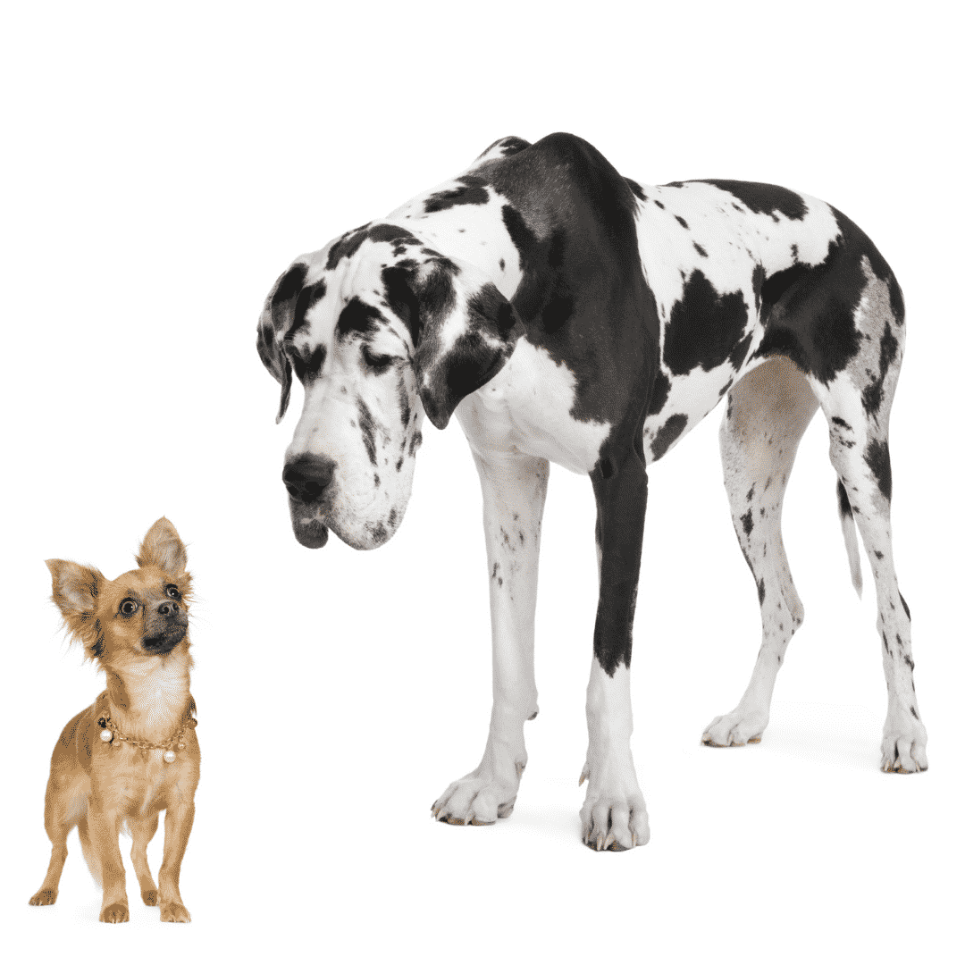 What are the Different Sizes of Dogs? Dogsized