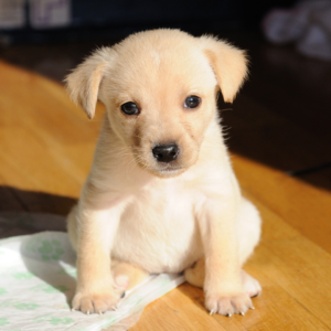 What you need for your new puppy or dog