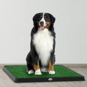 Why You Should Get An Indoor Dog Potty