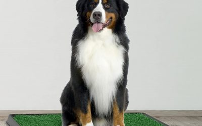 What Size Crate Do I Need For a 70 Lb Dog? Dogsized