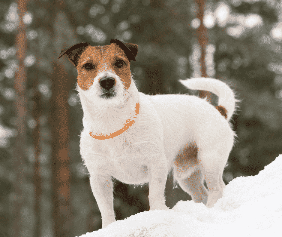 Are LED Dog Collars Safe For Dogs?