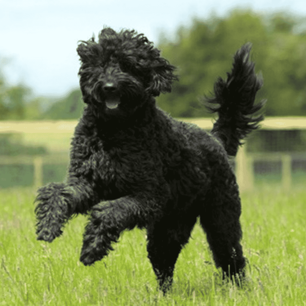 What are the Different Dog Sizes? Dog Breeds Insider Dogsized