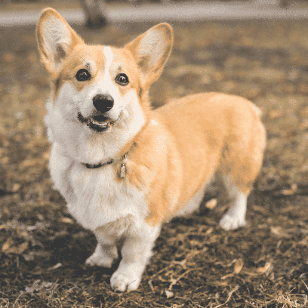 How Much Exercise Do Small Medium and Large Dog Breeds Need? Dogsized