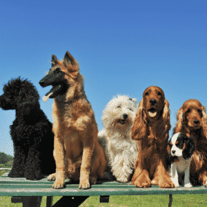 What Does A Dog DNA Test Tell You About Your Dog?