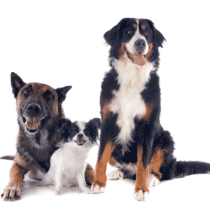 What is the Best Dog DNA Test?