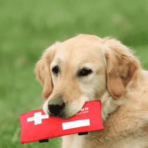 Dog First Aid - Helpful Items to Keep at Home