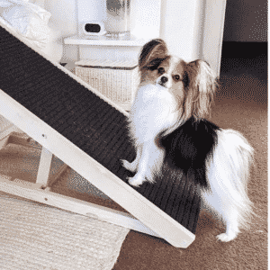 Which is Better - Dog Ramp or Stairs?