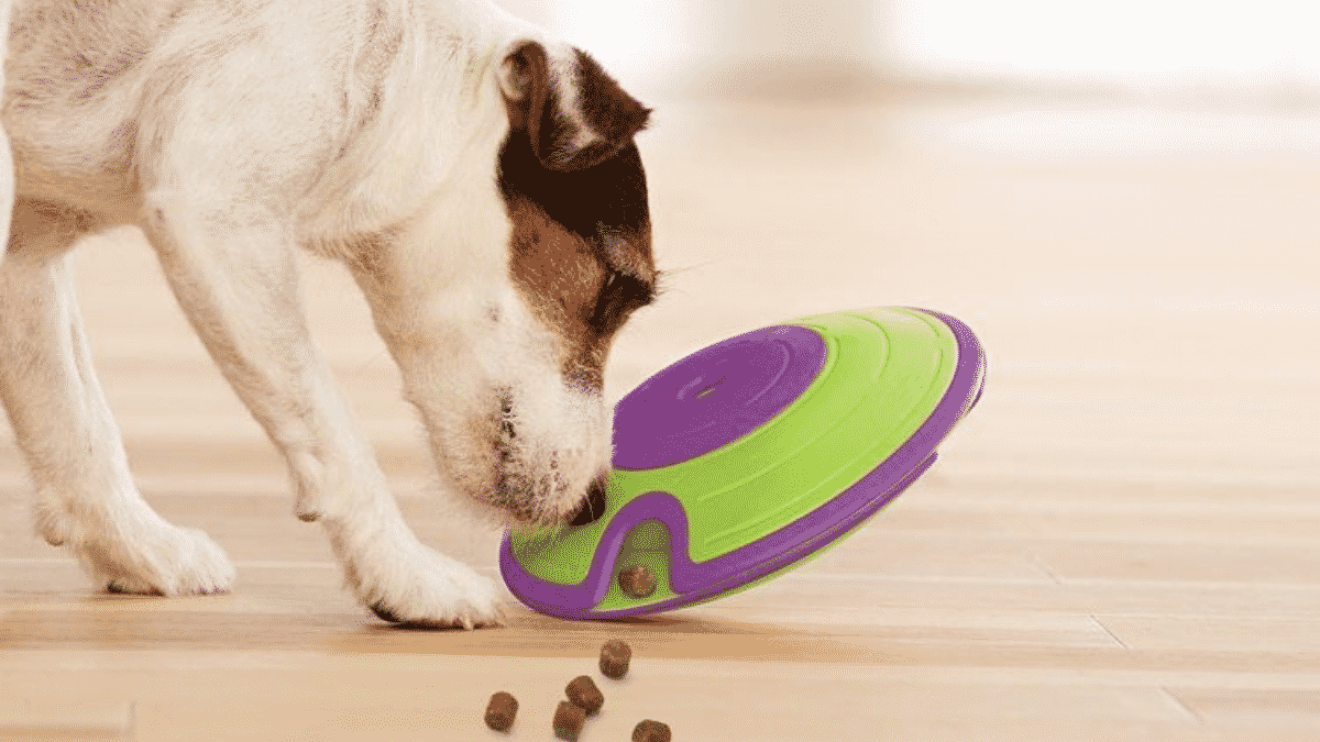 Are Dog Treat Dispenser Toys Good for Dogs?