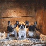 Top 10 Most Popular Dog Breeds Dogsized
