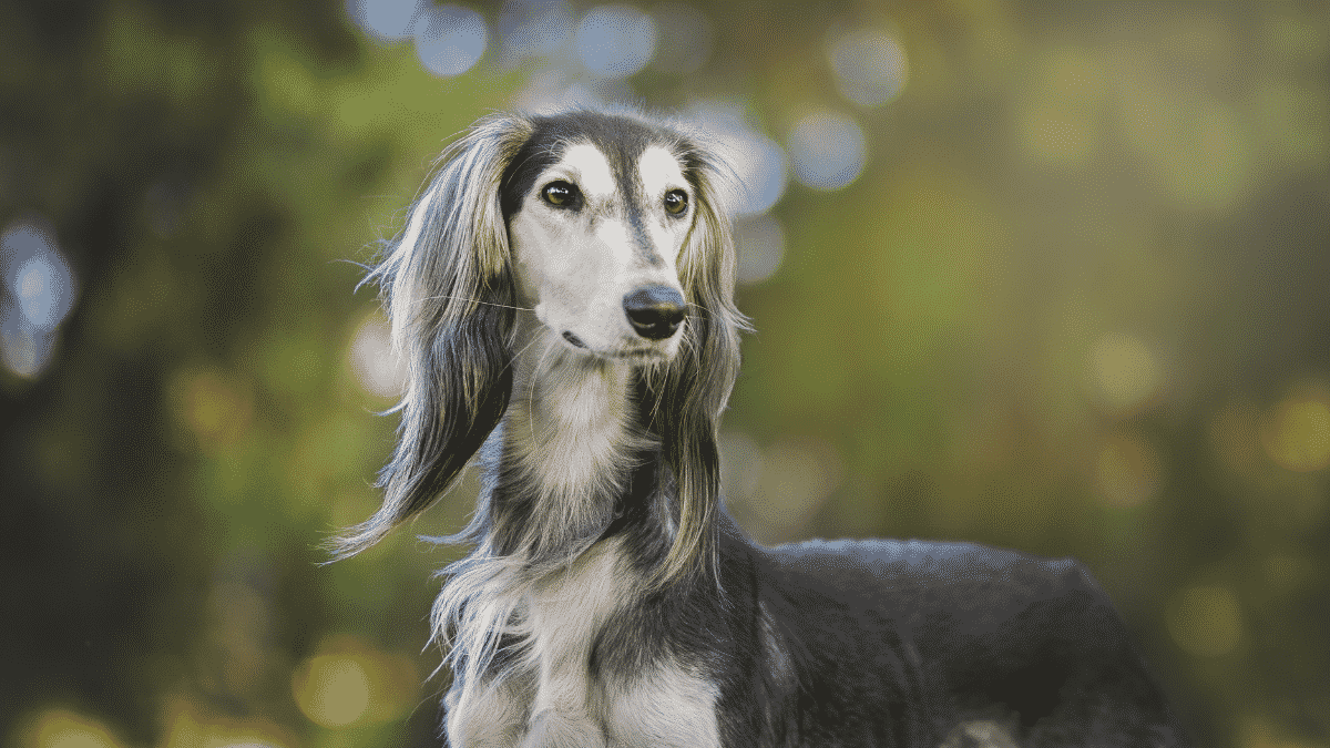 Best Dog Breeds For First-time Dog Owners