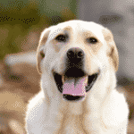 Best Medium Dog Breeds For Families With Kids Dogsized