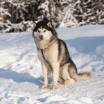 Worst Dog Breeds For Families With Kids Dogsized