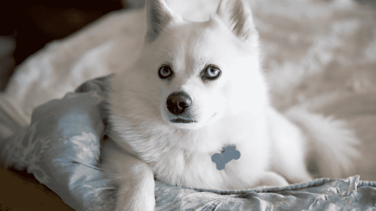 Find The Perfect Hybrid Dogs For Your Family